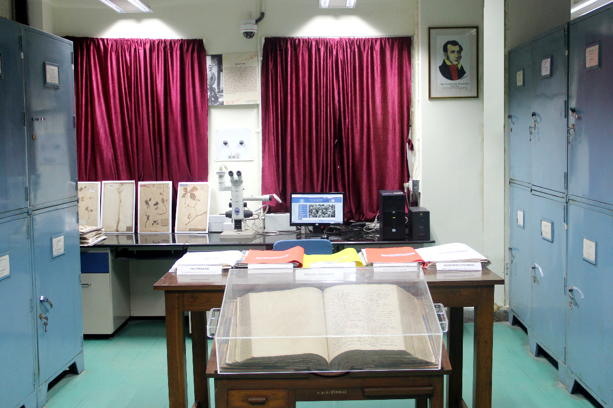 Visit the Herbarium
