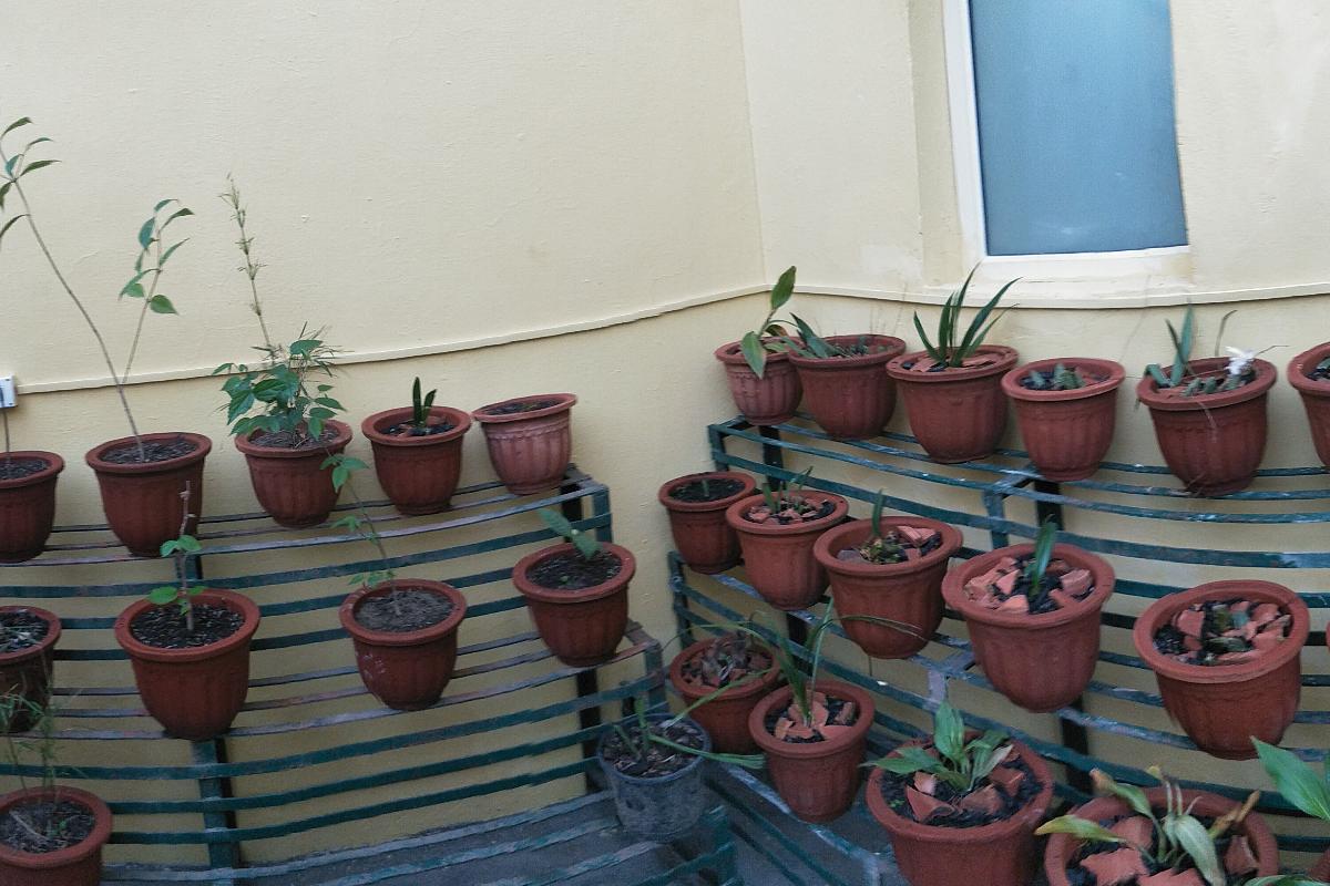 Associated Garden