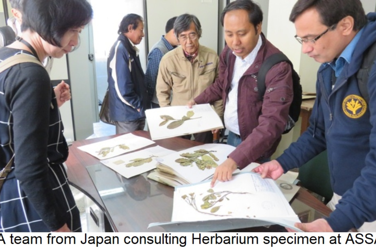 A team from Japan consulting Herbarium specimen at ASSAM