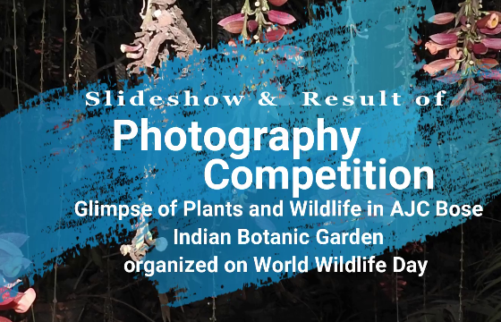 Photography competition video